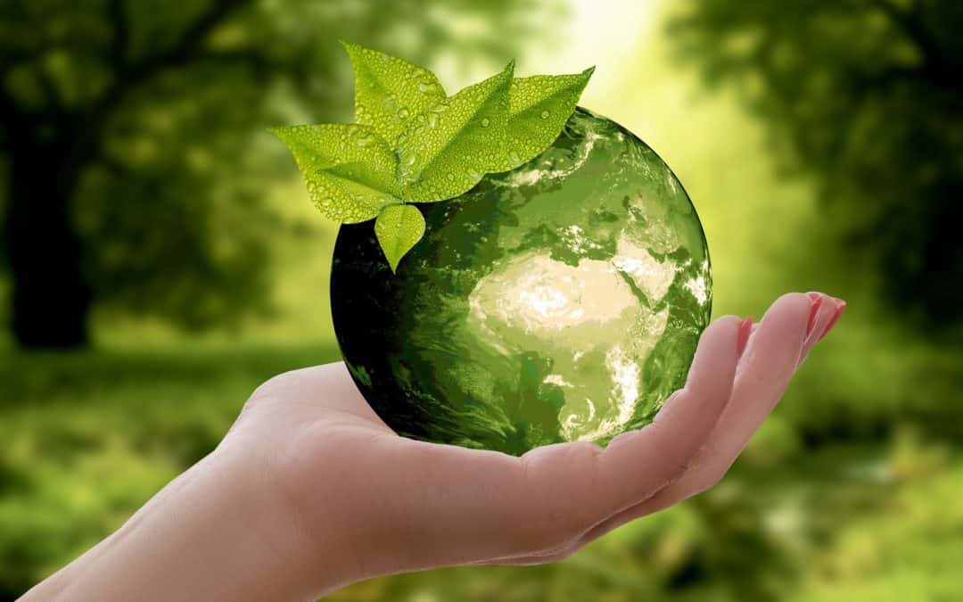 The Role Of Biomass In Achieving The Sustainable Development Goals