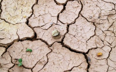 Bioenergy Crops on Marginal Land