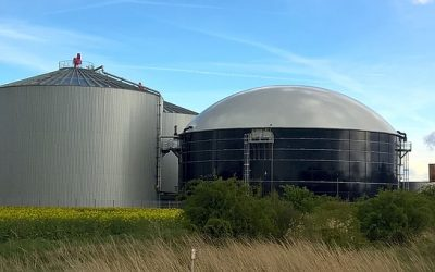 Biogas Powerplant: The Potential of Arundo donax