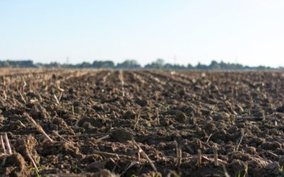 Soil Organic Carbon Sequestration By Arundo Donax