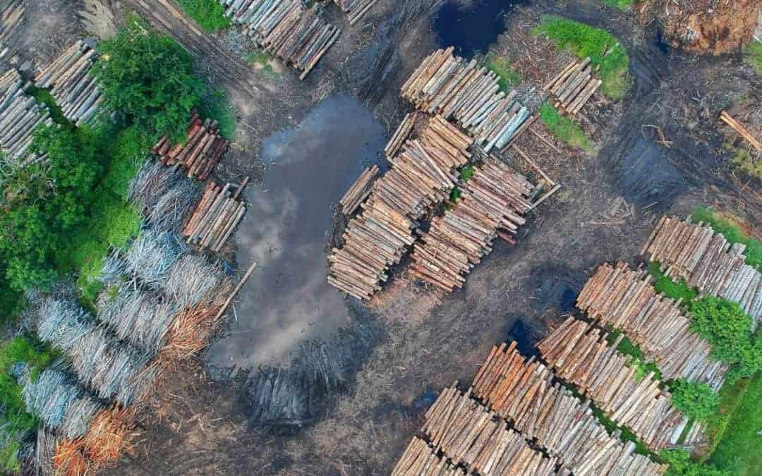 Norway: Ban on Deforestation